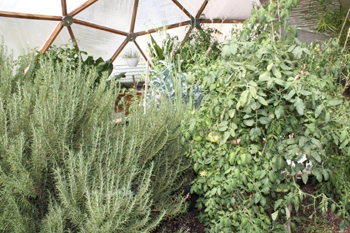 David W. Allan, year round green house for herbs and fresh food, spirtuality and health.