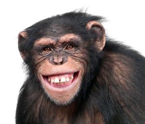 Monkeydo.jpg