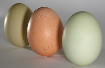 standing-egg-on-end
